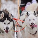 Dog sleighs, snowboarding and ice skating: winter fun in Moscow