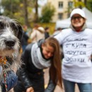Выставка приютских собак «Keep calm and love dogs»!