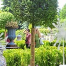 Landscaped gardens, a new variety of rose and collector's kimonos to be presented at the Moscow Flower Show
