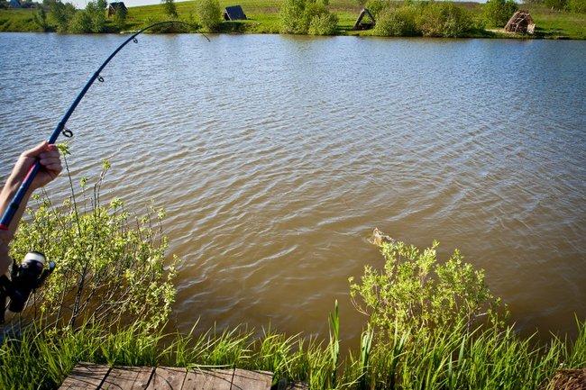 москва пруд рыбаки