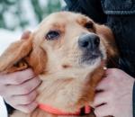 В парке «Бабушкинский» бездомным животным ищут хозяев