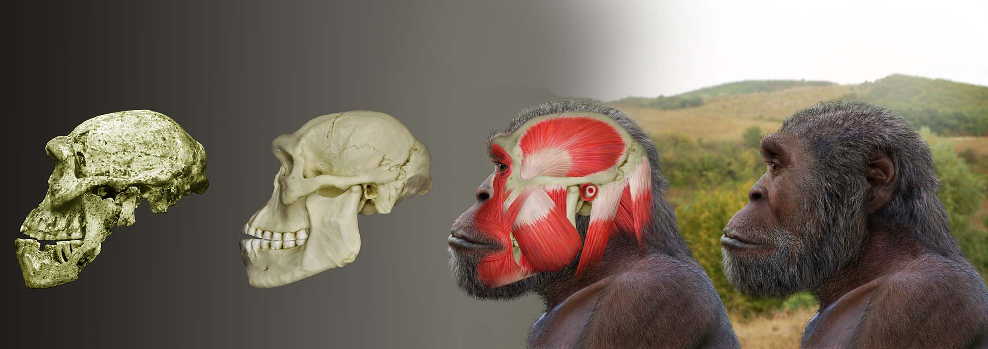 Dmanisi5_head_restorationn