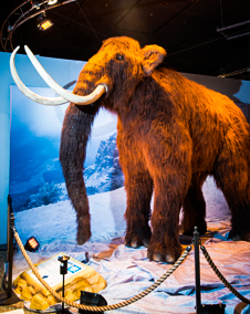 sstbWoolly_Mammoth_Both
